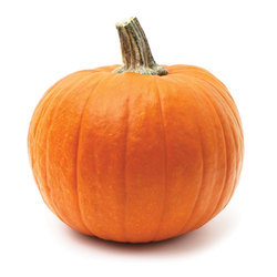 Pumpkins Cold Storage Rental Service