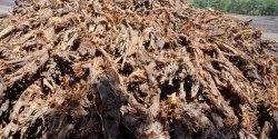 Root Wood