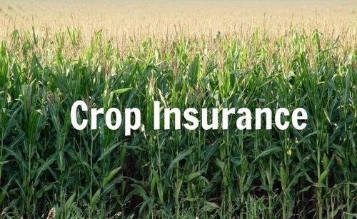 ফসল বীমা (Crop Insurance)