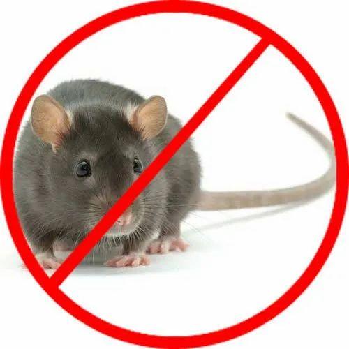 rat control services,