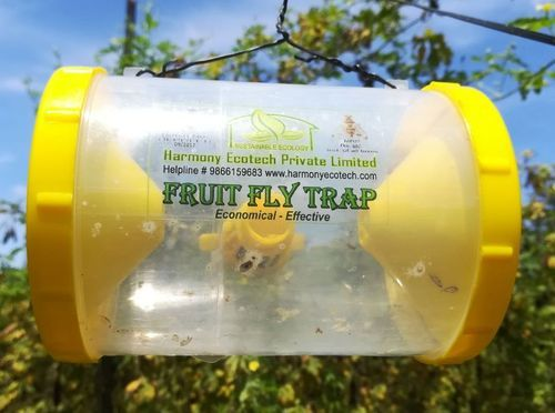 Papaya Fruit Fly Pictures