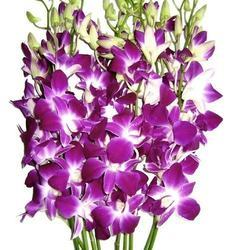 Hybrid Orchids Flowers For Gifting Rs 250 Bunch Crazyflora Id 6317932433