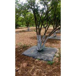 Tree Mulching Film