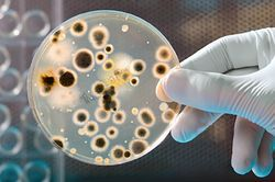 Microbiological Testing Services, Lab
