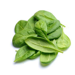 Spinach Leaf Absolute Oil