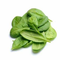Spinach Leaf Absolute Oil&nbsp