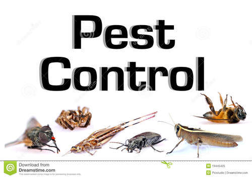 Bed Bug Control Services In Pimpri Chinchwad Midc By Hi Expert Pest