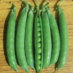 A Grade Maharashtra Fresh Green Peas, Gunny Bag