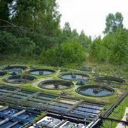 Sewage Water Treatment Plant (STP)