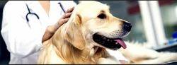 Orthopedic Procedures Treatment Services For Pet