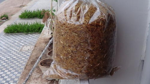 Mushroom Cultivation Training Services in Sargasan
