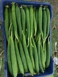 Green Utter pradesh Zucchini, Carton, 20 Kg