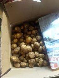 A Grade Fresh Potato