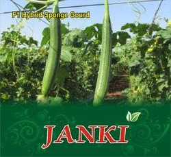 Janki F-1 Hybrid Sponge Gourd