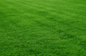 Selection One Grass, For Decoration / Sports Fields / Cushioning
