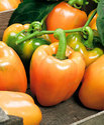 Orange Capsicum Seeds