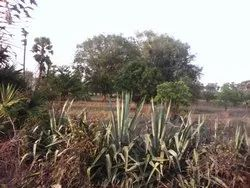 5 Acres Agriculture Land For sale Rs:25,000,00/- Per Acre ,15 KM Distance From Kothavalasa Hurry....