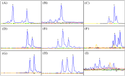 Qiagen Multiplex PCR Kit