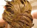 Henna Based Mahogany Hair Color