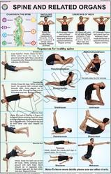 Spine & Related Organs For Yoga Chart