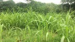 Farming Land For  Sale Near Virat Nagar Jaipur
