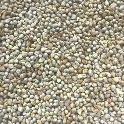 Green Millet Unclean