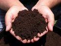 Vermiculture Organic Compost