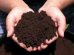 Vermiculture Organic Compost