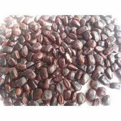 Seeds Seed Tamarind