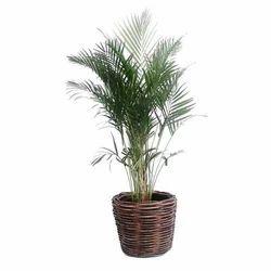Planter Cane Basket