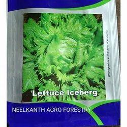 Lettuce Iceberg Seed