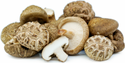Shiitake Mushroom, Packaging Type: Pp Bag