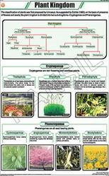 Plant Kingdom For Botany Chart