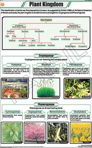 Full Color Art Paper Laminated Plant Kingdom For Botany ...