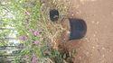Plastic 11.5 Liter Pot