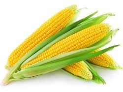 Sweet Corn-F1- Sweet Gold Seeds