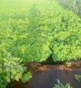 Natural Dashrath Grass Seed ,For Fodder
