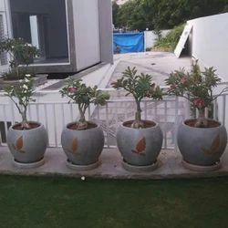 Round Gardening Cement Pot