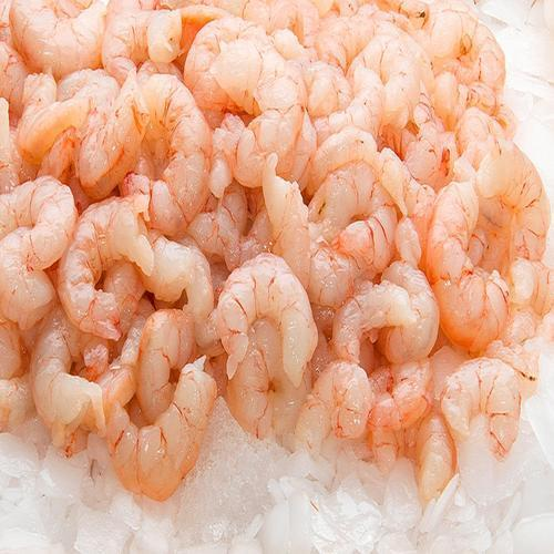 Fresh Medium Prawns Live Shrimps Prawn झग Atnaa Agro