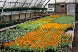 Multicolor Natural Flower plant