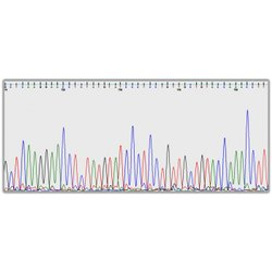 DNA Sequencing Plasmid-PCR Products- Sanger Service