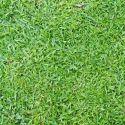 Natural Blade Grass