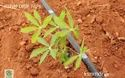 250 Microns Irrigation System