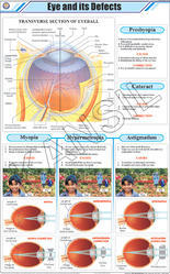 Eye & its Defects For Physics Chart