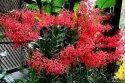 Flower Annie Black Orchids