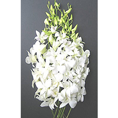 Sonia White Orchid Flower Bunch At Rs 20 Piece Sonia White Orchid