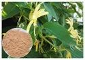 Lonicera Flower Extract