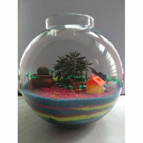 Plant Glass Terrarium Glass Terrarium ट र र र यम Rana