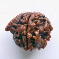 Ganesh Rudraksha Beads