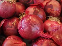 Shallots  Red Onion